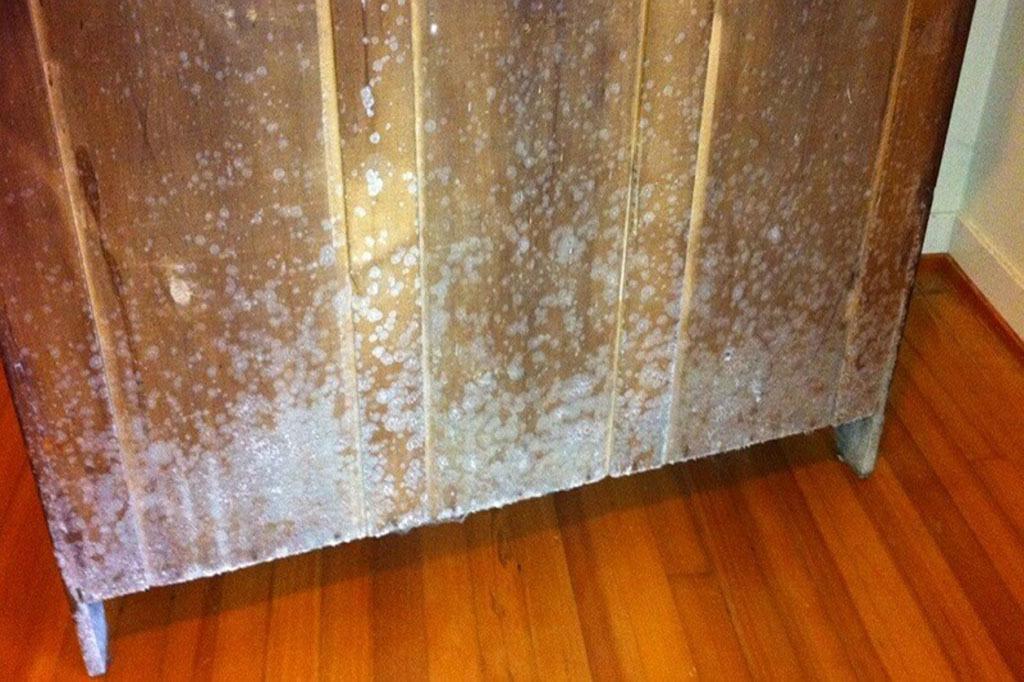 5 bước xử lý nấm mốc trên đồ gỗ nội thất