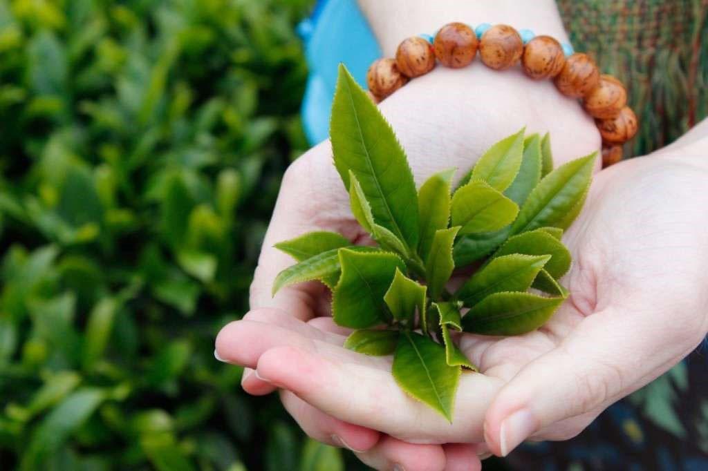 Cách khử mùi và chống côn trùng cho tủ gỗ công nghiệp