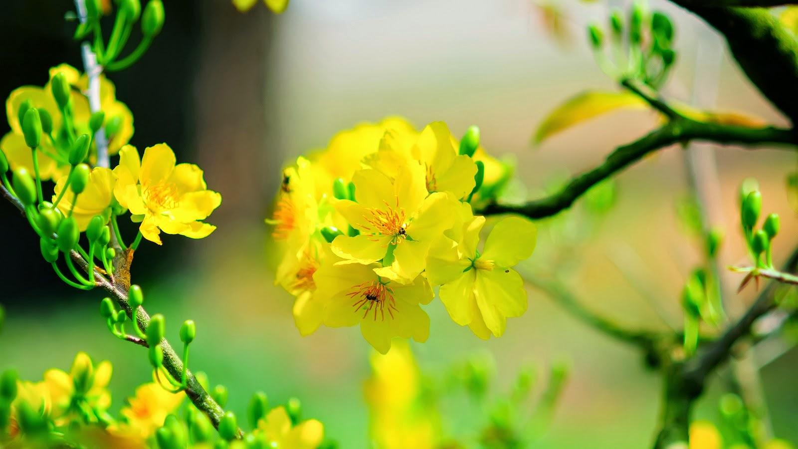 Chọn hoa trưng bày ngày Tết để rước tài lộc vào nhà