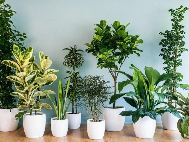 Vì sao nên trồng cây xanh trong nhà?